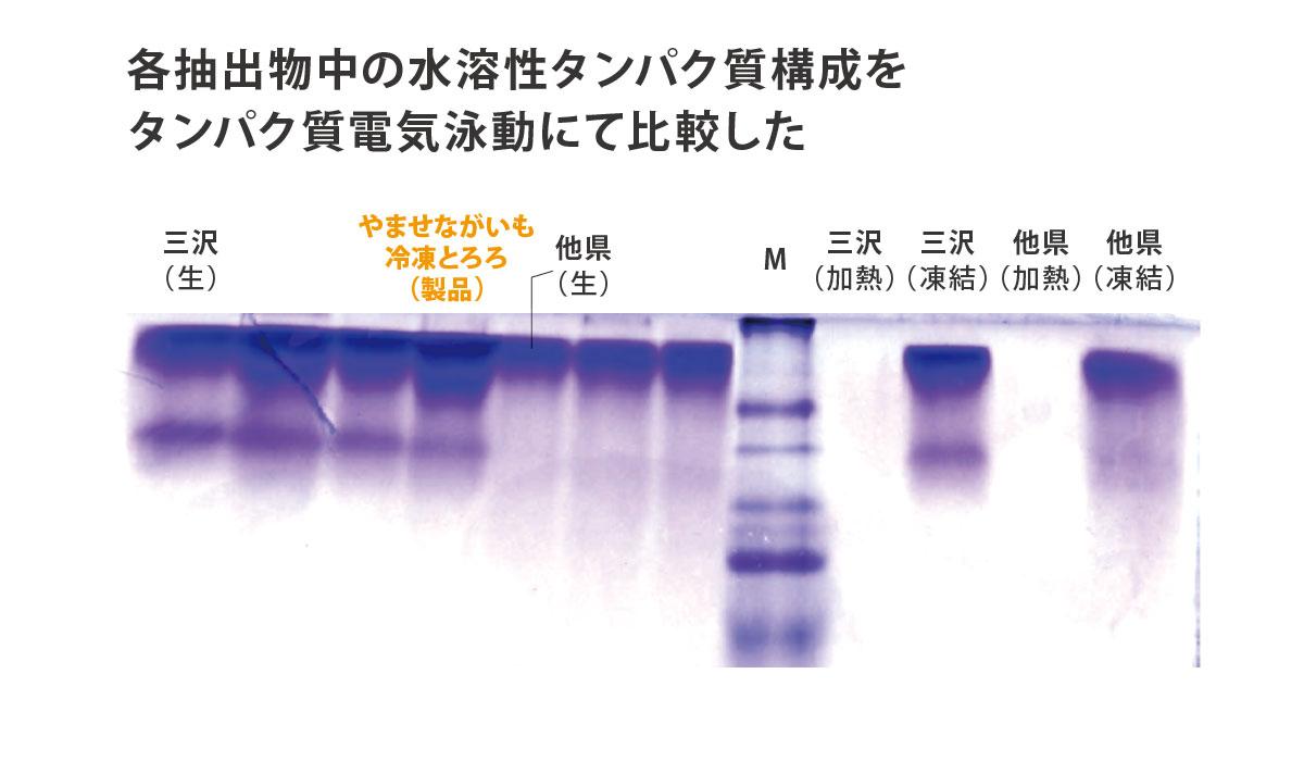 水溶性タンパク質の構成比較